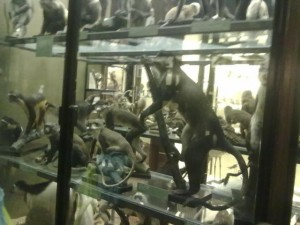 Display Cabinet at Tring Museum