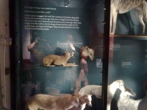 History of domestication of canines