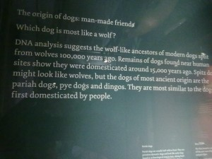 history of the domestic dog